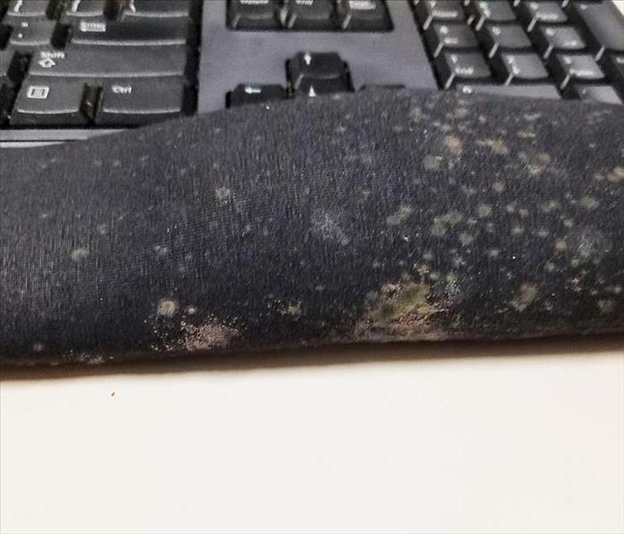 mold on a mouse pad at a office
