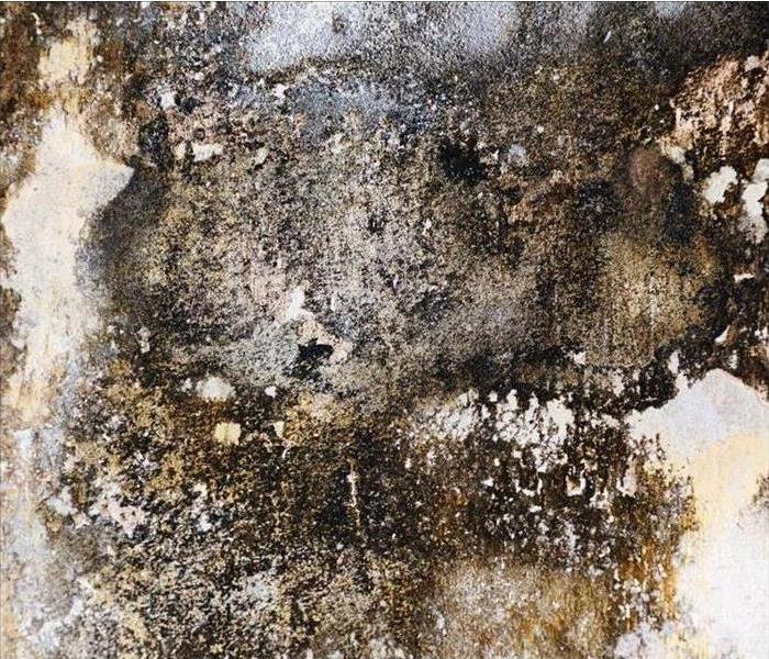 Mold Damage | SERVPRO of Jackson and DeKalb Counties