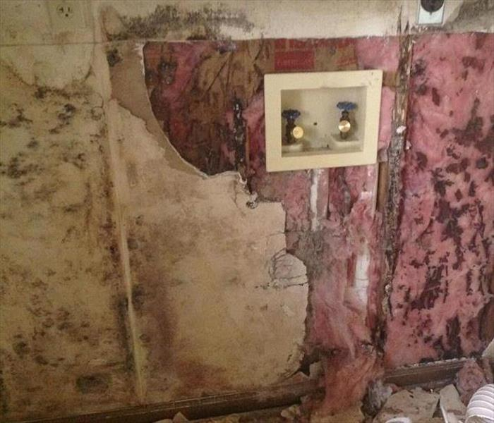 Mold Remediation Mold and You