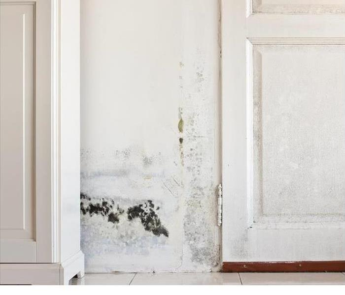 Mold Remediation Mold Can Cause Big Problems in Fort Payne and Surrounding Areas